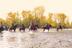 Caballos, río de Tesino Fotos de archivo libres de regalías