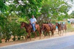 Caballos rectores del ranchero, Cuba imágenes de archivo libres de regalías