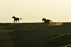 Caballos salvajes Foto de archivo