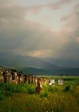 Caballos salvajes blancos y marrones en un campo. imagen de archivo libre de regalías