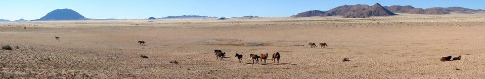 Caballos salvajes del panorama del namib Imagenes de archivo