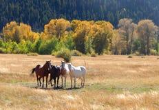 Caballos salvajes en el arco Wyoming de la medicina fotografía de archivo