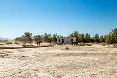 Caballos salvajes en el empalme de Death Valley Foto de archivo libre de regalías