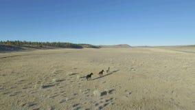 Caballos salvajes funcionados con a través de los llanos del desierto metrajes