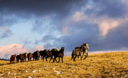 Caballos salvajes que corren en montain Imagen de archivo libre de regalías