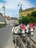 Caballos turísticos, Viena foto de archivo