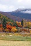 Caballos y árboles Foto de archivo libre de regalías