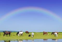 Caballos y arco iris Fotos de archivo libres de regalías