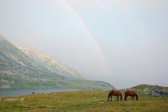 Caballos y arco iris Fotografía de archivo
