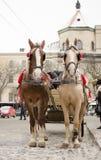Caballos y carro en Lviv fotos de archivo libres de regalías