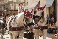 Caballos y carro en Viena Foto de archivo