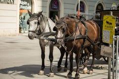 Caballos y carro en Viena Foto de archivo libre de regalías
