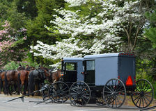 Caballos y cochecillos de Amish en Lancaster, PA imagen de archivo libre de regalías