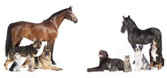 Caballos y collage de los perros Fotografía de archivo libre de regalías