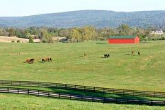 Caballos y granero rojo Imagen de archivo libre de regalías