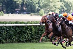 Caballos y jinetes en una carrera de caballos Fotografía de archivo