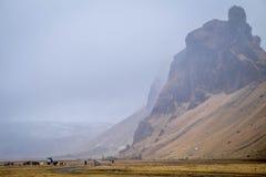 Caballos y montañas islandeses Imágenes de archivo libres de regalías