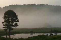 Caballos y niebla 1. Imagen de archivo