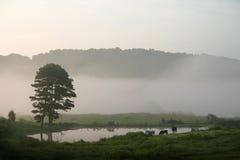 Caballos y niebla Fotos de archivo libres de regalías