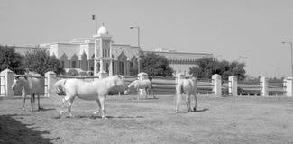 Caballos y palacio del emiri foto de archivo