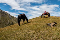 Caballos y perro en la colina Imagenes de archivo