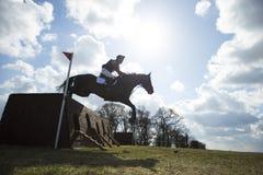 Caballus de ferus d'Equus - cheval Photographie stock libre de droits