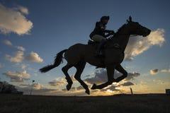 Caballus de ferus d'Equus - cheval Photo libre de droits
