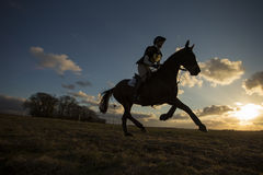 Caballus de ferus d'Equus - cheval Images stock