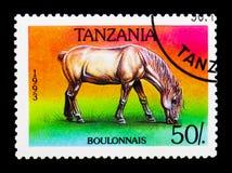 Caballus di ferus di equus di Boulonnais, serie dei cavalli, circa 1993 Immagine Stock