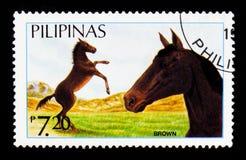 Caballus di ferus di equus di Brown, serie filippino dei cavalli, circa 1985 Fotografia Stock