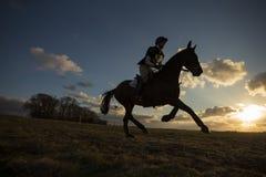 Caballus ferus Equus - άλογο Στοκ Εικόνες