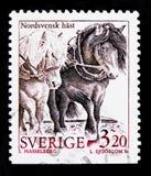 Caballus ferus Equus βόρειων σουηδικό αλόγων, κατοικίδια ζώα serie, circa 1994 Στοκ Φωτογραφίες