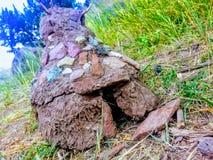 Cabana da lama imagem de stock royalty free