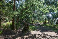 Cabana de Ghober, um do local de acampamento o mais favorito da montagem Papandayan exceto Pondok Salada devido ao lugar estratég fotografia de stock royalty free