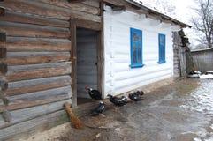 Cabana de madeira com os patos na jarda fotografia de stock