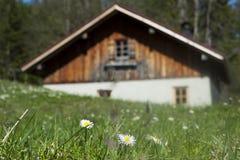 Cabana de madeira idílico com grama verde fresca Imagens de Stock Royalty Free