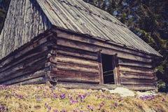 Cabana de madeira no vale de Chocholowska, montanhas de Tatra Imagens de Stock