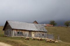 Cabana e carneiros Fotografia de Stock Royalty Free