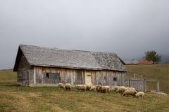 Cabana e carneiros Imagem de Stock