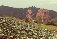 Cabana e flor de cerejeira pequenas no gabbage Imagens de Stock Royalty Free