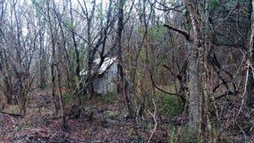 Cabana escondida na floresta Foto de Stock Royalty Free
