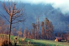 Cabana no meio do campo Fotografia de Stock