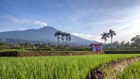 Cabana no meio do campo do arroz Fotografia de Stock Royalty Free