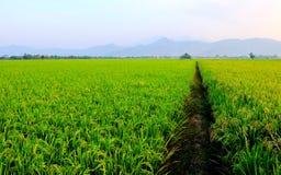 Cabana no meio dos ricefields Imagem de Stock