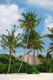 Cabana nos manguezais Imagens de Stock Royalty Free