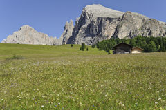 Cabanas, vacas de leite, Langkofel e Plattkofel alpinos no verão Foto de Stock