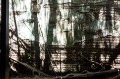 Cabane dans un arbre d'Anping Ce vieil entrepôt est couvert par s'est embranché de la branche de banian antique qui est Photo libre de droits