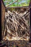 Cabane dans un arbre d'Anping Ce vieil entrepôt est couvert par s'est embranché de la branche de banian antique qui est Photos libres de droits