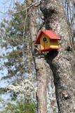 Cabane dans un arbre d'oiseau Images libres de droits