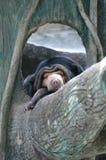 Cabane dans un arbre d'ours Images libres de droits